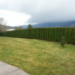 Aspen Landscaping and lawn maintenance services
